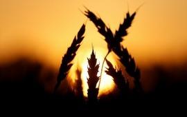 Spiegel: Доходы России от экспорта аграрной продукции