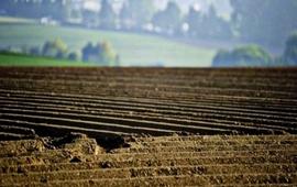 Украинский рынок земли: когда начнется продажа трети мирового чернозема
