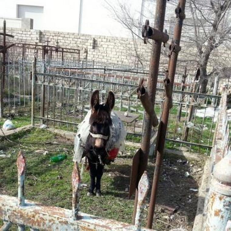 Разрушенное христианское армяно-русское кладбище в Монтино (Баку)
