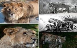 Кошачьи породы Армении