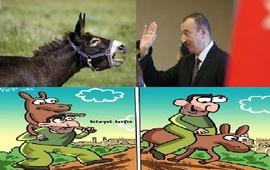 В Азербайджане с поголовьем ишаков
