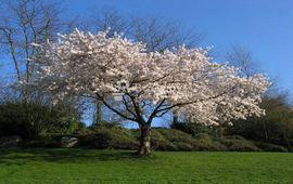 Был апрель и цвели деревья