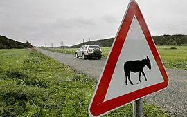 Пропавшие ослы в Азербайджане заметают следы?
