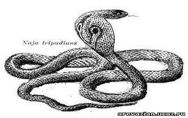 Змей Найя - Макарац