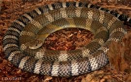 Змеиные войны - Араратская долина