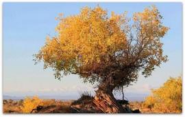 Фестский Диск о лечебных свойствах «бури-армени»