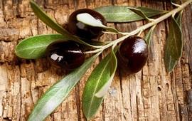 Оливковое дерево родом из Армении?
