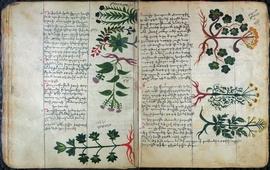 История культуры и нравственности в медицине Армении