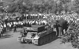 Xто случилось с добродушным слоном Вовой
