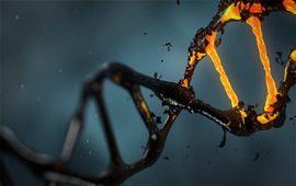 ДНК и происхождение народов - Армяне