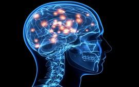 Обнаружен древнейший мозг человека