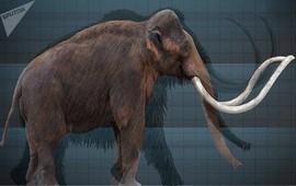 Elefas Armenicus - Армянский слон