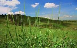 Заповедник Эребуни - Генофонду древнейших растений