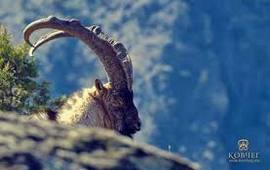 Дикая природа Армении - Wildlife of Armenia