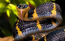 Заклинатели змей - Древняя Армения