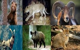 Формирование фауны Армении