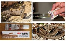 Не трогайте природу - Яд змеи дороже золота