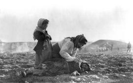 Геноцид армян - Политика бандитов