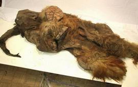 Шерстистые мамонты жили и на Армянском нагорье