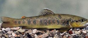 Вопреки браконьерам - Рыба