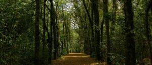 Парк La Armenia в столице Эквадора