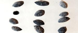 В Киликии найдены 4000 летние