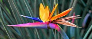 Райский цветок - Армянская сказка