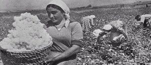 Сбор хлопка в Армении 1930-1940гг.