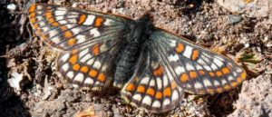 Древняя бабочка
