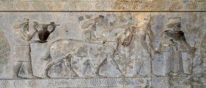 Древняя культура коневодства