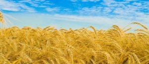 Армения - Земля пшеницы