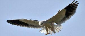 В бассейне озера Ван обнаружен новый вид птиц
