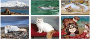 Ванская кошка - Древнее армянское сокровище