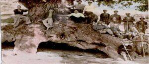 Дуб посаженный Варданом Мамиконяном