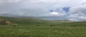 Азербайджанцы открыли огонь по пастуху и украли 80 голов скота в селе Кут