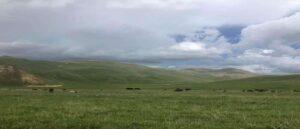 Азербайджанские военнослужащие воруют скот у жителей Армении